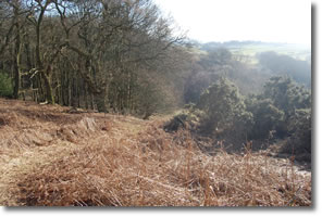 Steep descent on the edge of Peel Wood